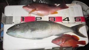 キザクラH28年9月29~30日釣果(小サイズ)