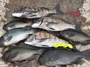 釣果と愛用ウキ 17GTR