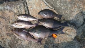 津和崎釣果30.3.25