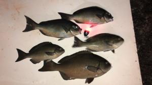 山本魚だけ