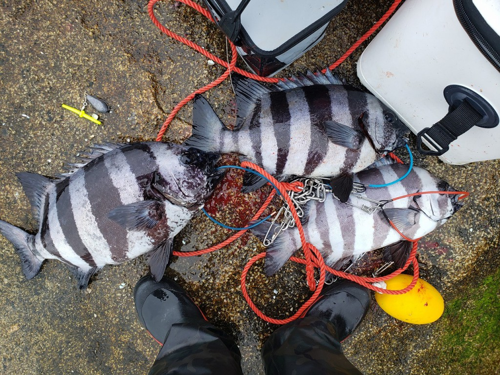 7日は数釣りも楽しめました。当日も宙釣りゴムテンビンの威力が炸裂したようです。20210507_104700