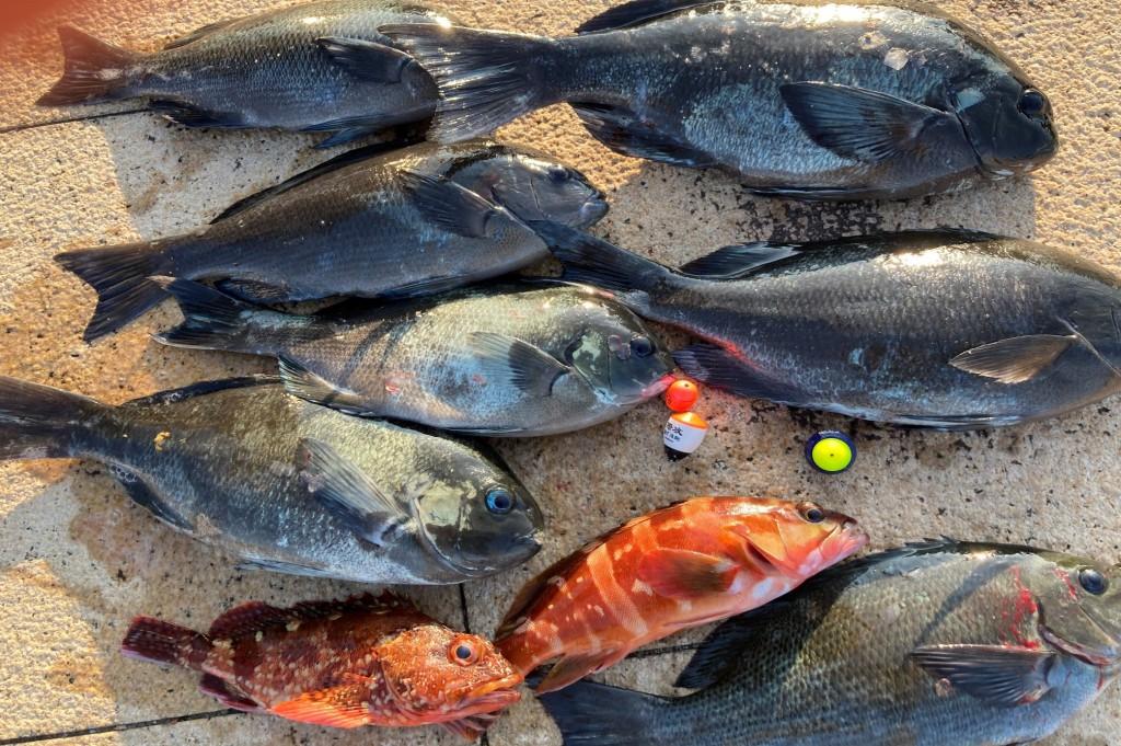 7いっぱい釣果